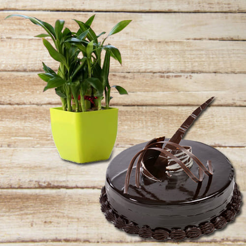 Happy Birthday Present of Chocolate Truffle Cake with 2 Tier Good Luck Bamboo Plant