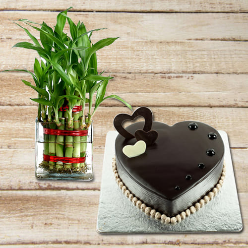 Attractive Birthday Gift of Heart Shape Chocolate Cake with 2 Tier Lucky Bamboo Plant