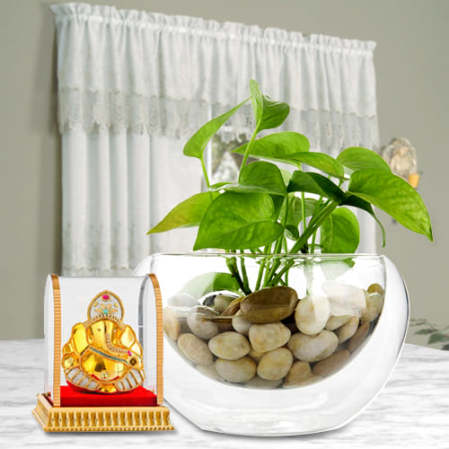 Golden Money Plant in a Glass Vase with Ganesh Idol