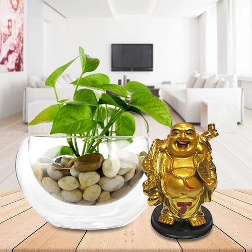 Divine Selection of Good Fortune Money Plant in Glass Vase with a Laughing Buddha Statue