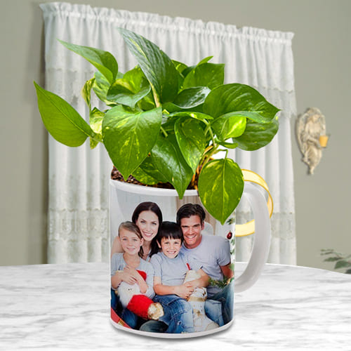 Classic Display of Money Plant in a Customized Coffee Mug