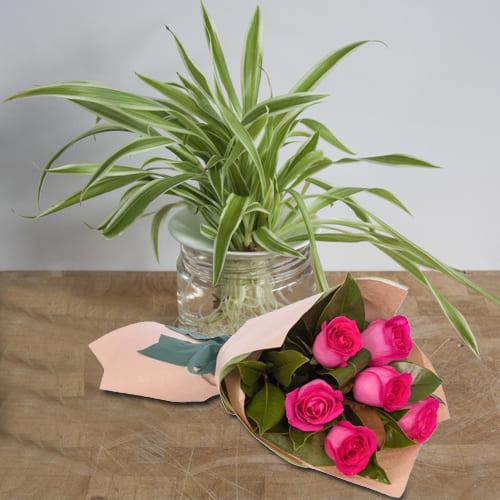 Attractive Selection of Pink Roses Bunch with Spider Plant in a Glass Planter