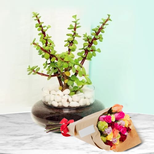 Graceful Combo of Jade Plant in Glass Planter with a Bouquet of Mixed Roses