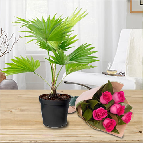 Exquisite Selection of China Palm in a Plastic Container with a Bunch of Pink Roses