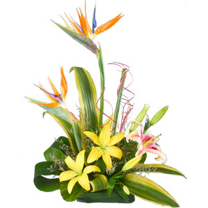 Exotic Flowers - Office Arrangement